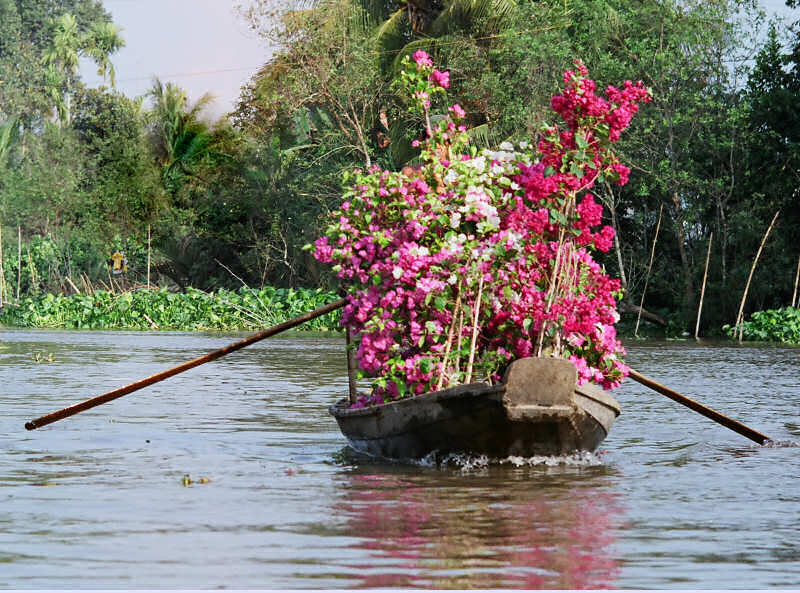 Wooden Rowboat with Flowers